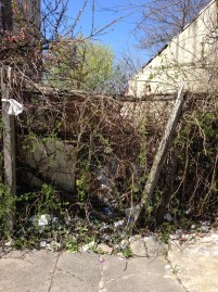 Germantown Avenue vacant lot -- overgrown
