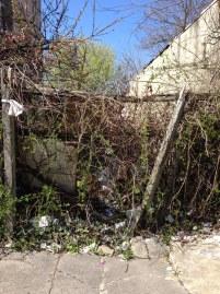 Germantown Avenue vacant lot -- overgrown